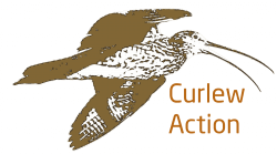 Curlew Action Shop