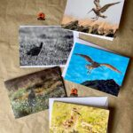 5 Mixed Note Cards