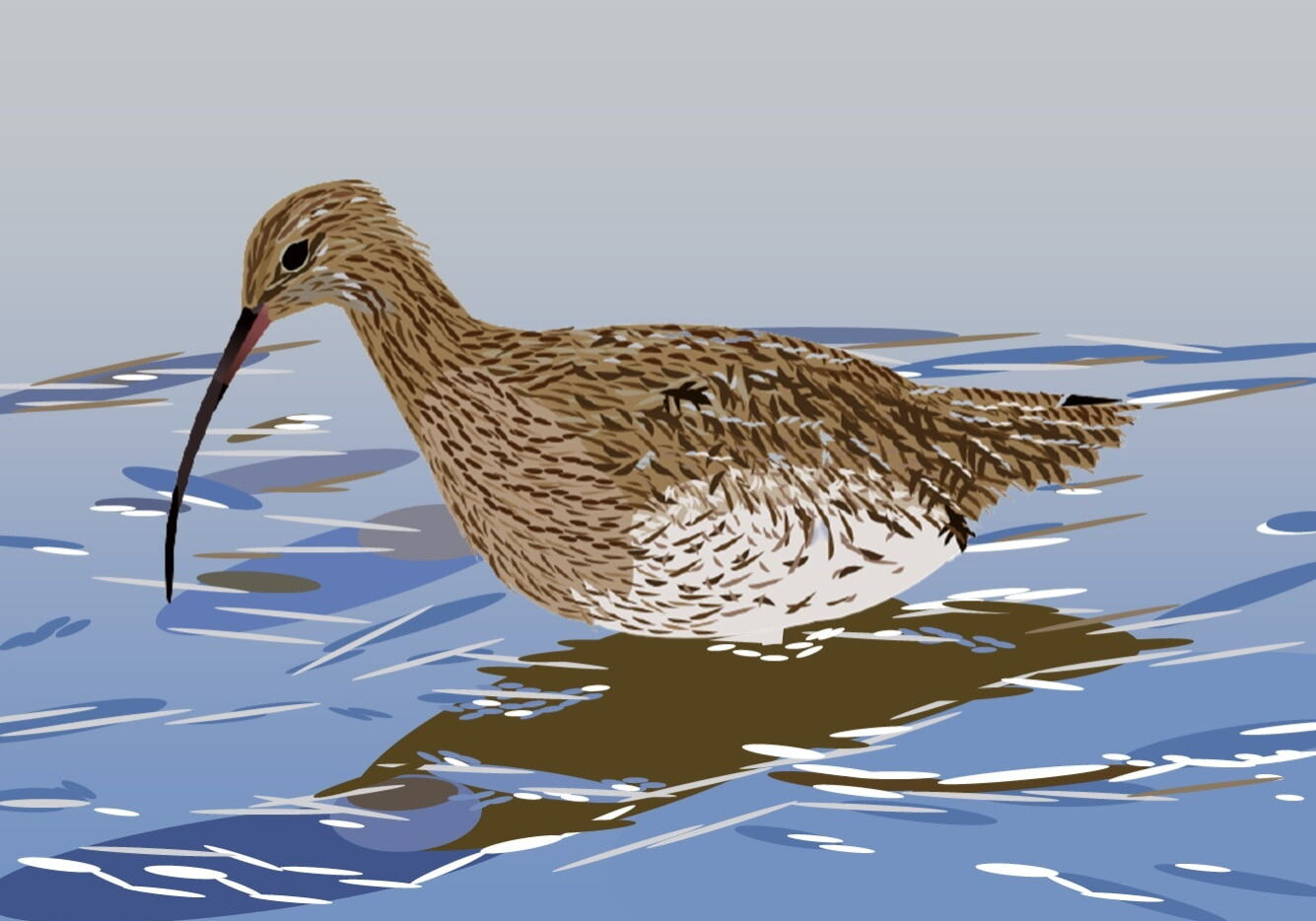 Curlew Wading (James Currell)