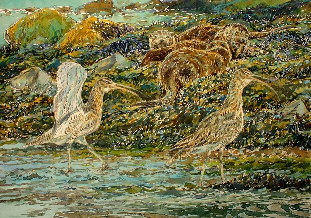 David Bennett - Curlews and Otters - Watercolour